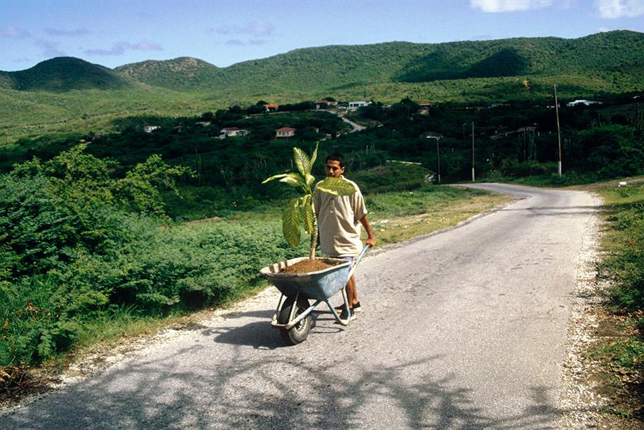 Wilfredo Prieto, Walk, 2000. Courtesy the artist and NoguerasBlanchard