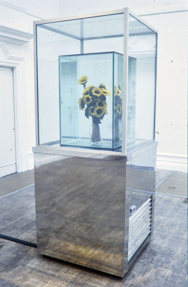 Installation view from Marc Quinn's 1998 solo exhibition.