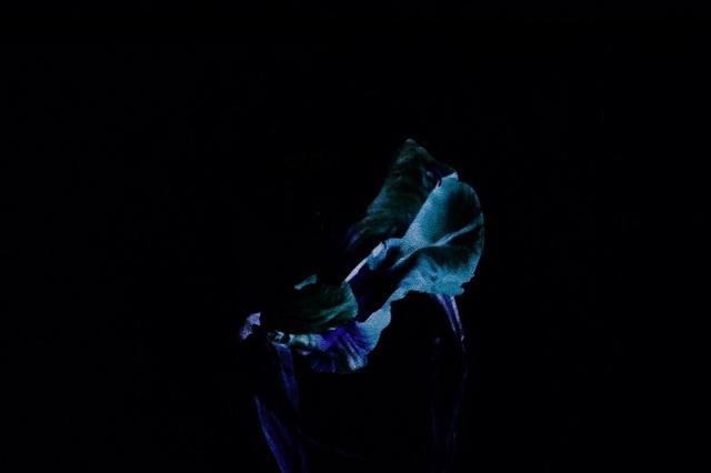 Performance: Cõvco: Concient of the Soul